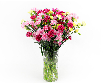 Bouquet of carnations. Shop in Ukrainian Marriage Agency.