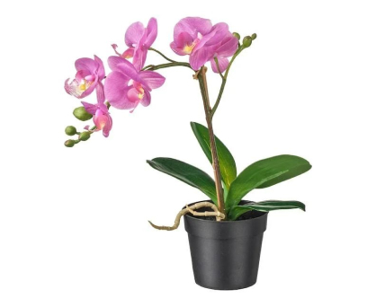 Orchid. Shop in Ukrainian Marriage Agency.